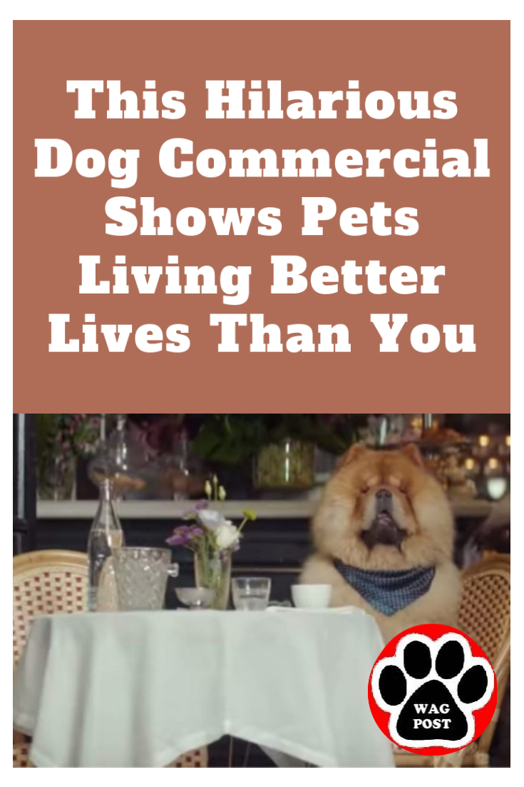 This Hilarious Dog Commercial Shows Pets Living Better Lives Than