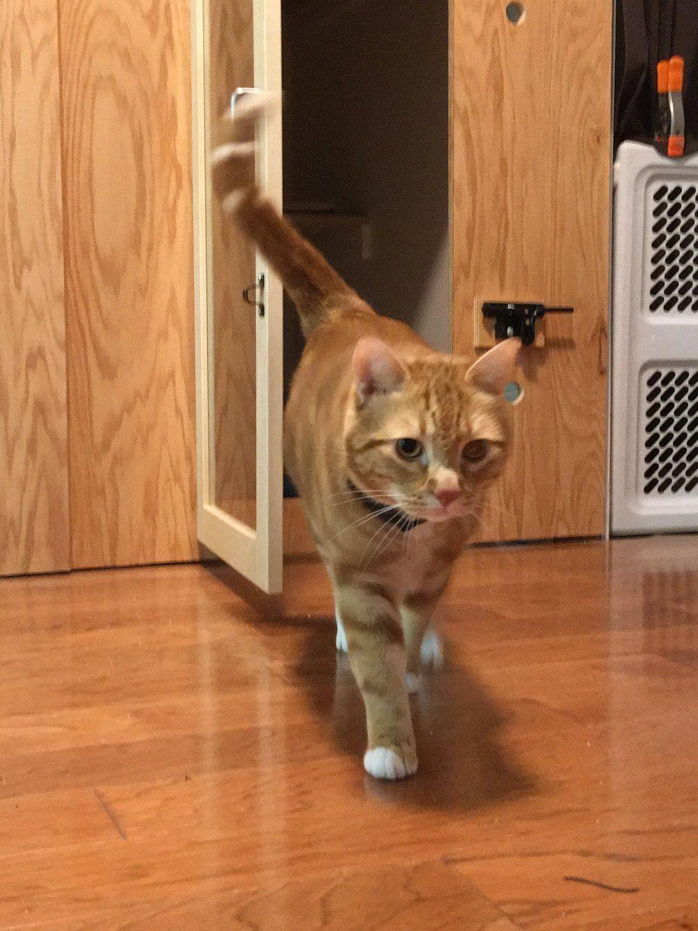 Oliver Cat Shack Cat Boarding Indoor Cat
