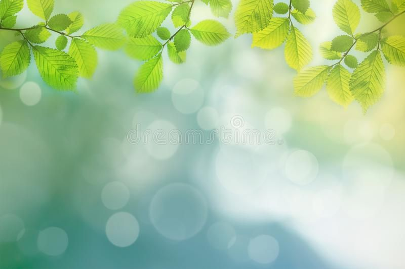 Spring Background Green Tree Leaves On Blurred Background Frame Sponsored Green Background Sp Spring Background Green Trees Nature Background Images
