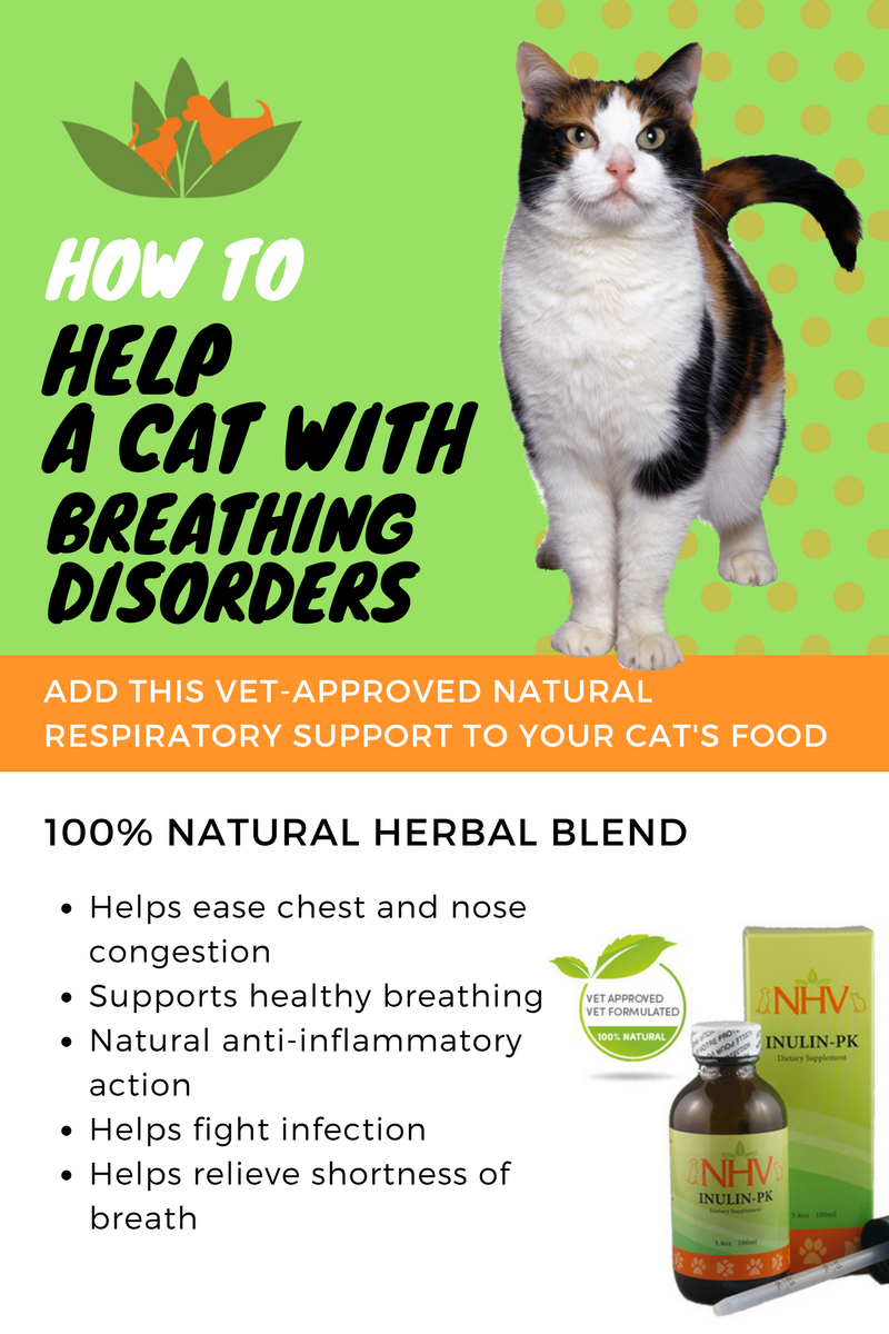 Resp Aid Natural Remedy For Respiratory Disorders Coughs And Bronchial Infections In Cats Hel Chest Congestion Remedies Congestion Remedies Chest Congestion
