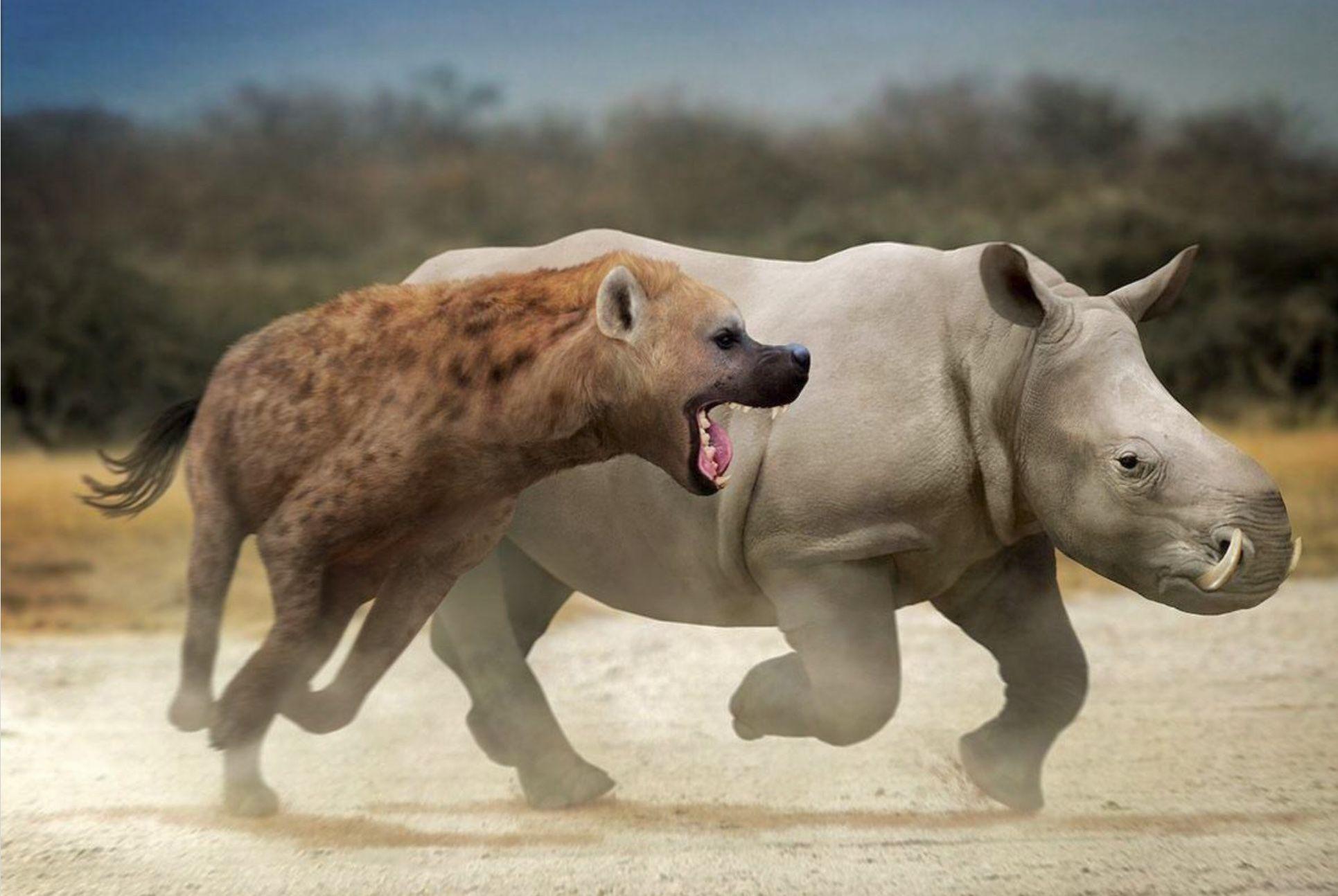 Giant hyena versus tusked rhino Prehistoric animals