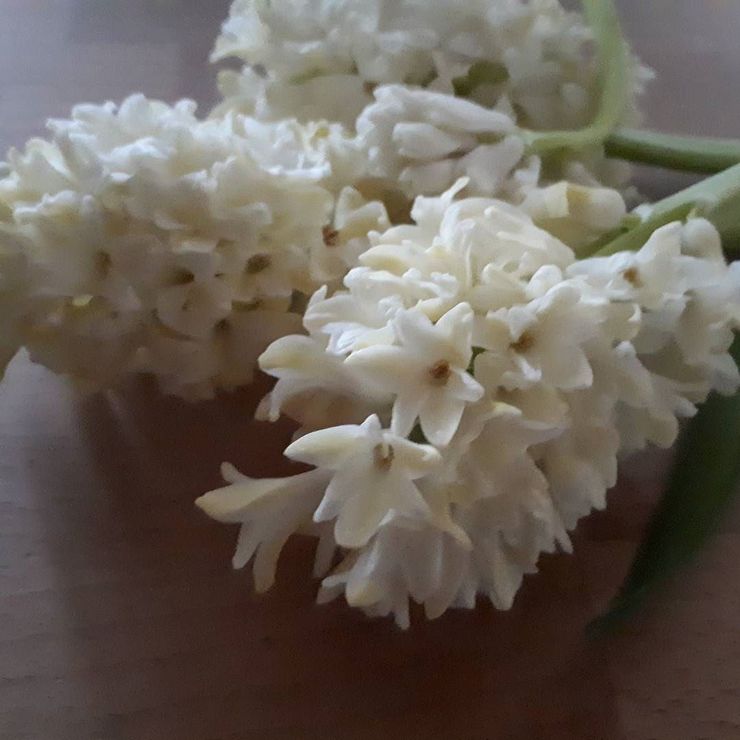 scented hyacinths. To stop their heavy heads