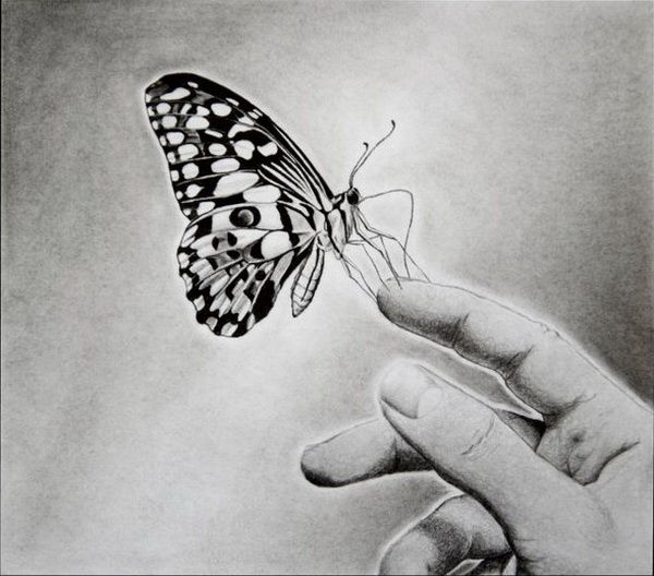 0ff6a9481e9 10+ Beautiful Butterfly Drawings for Inspiration - IdeaStand