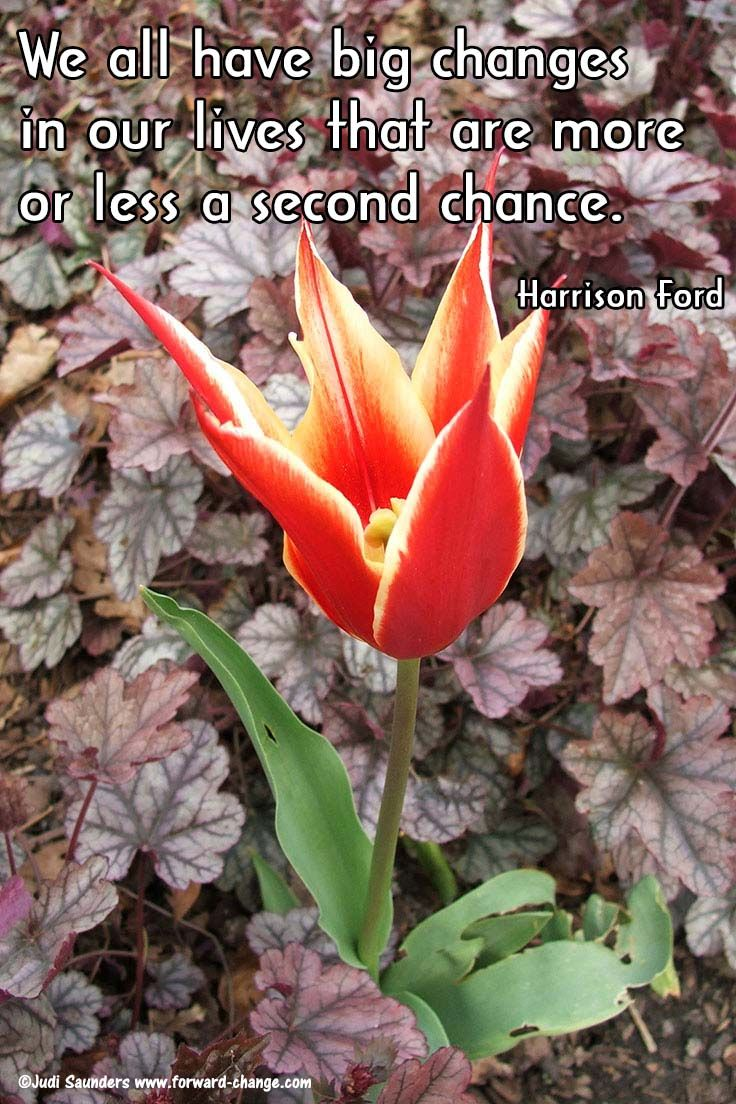 Be Sure You Take That Chance When It Comes Your Way Don T Be Afraid Of Change Sleep Quotes Great Inspirational Quotes Quotes