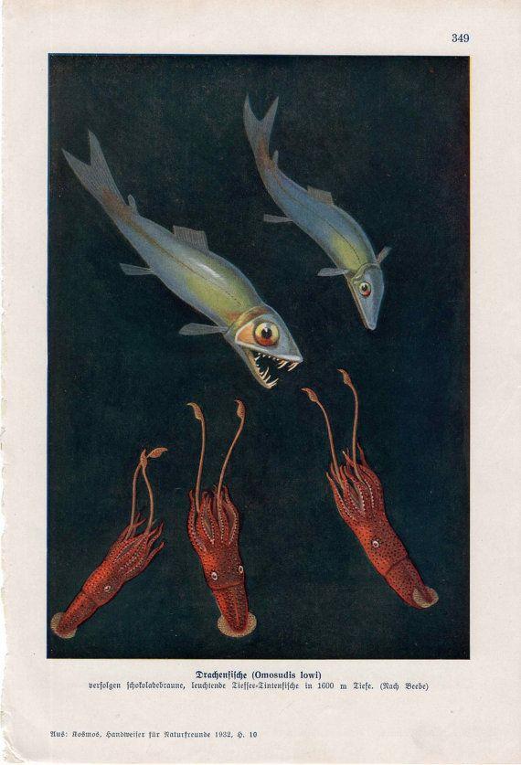 1932 deep sea creatures rare original antique by antiqueprintstore, $155.00
