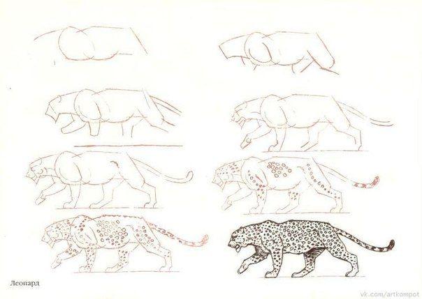 Рисуем котиков правильно.
