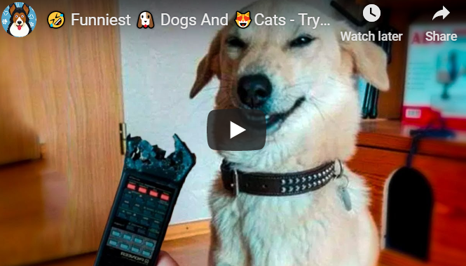 Try not to laugh animals - dogs and cats - Pet Animals Life