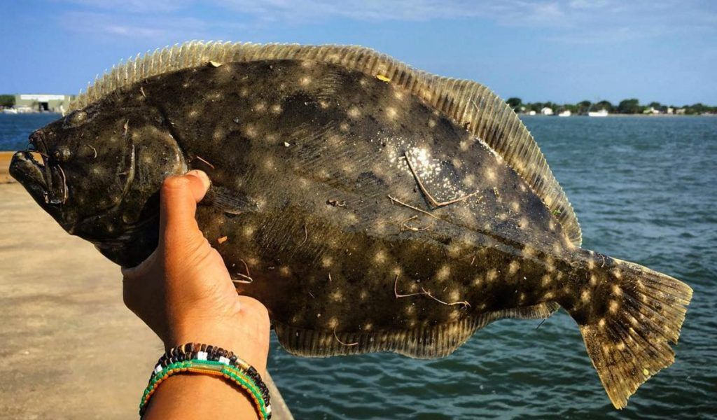 How To Catch Flounder Plus Free Pdf Catch Card In 2020 Flounder Fishing Catching Fish Inshore Fishing