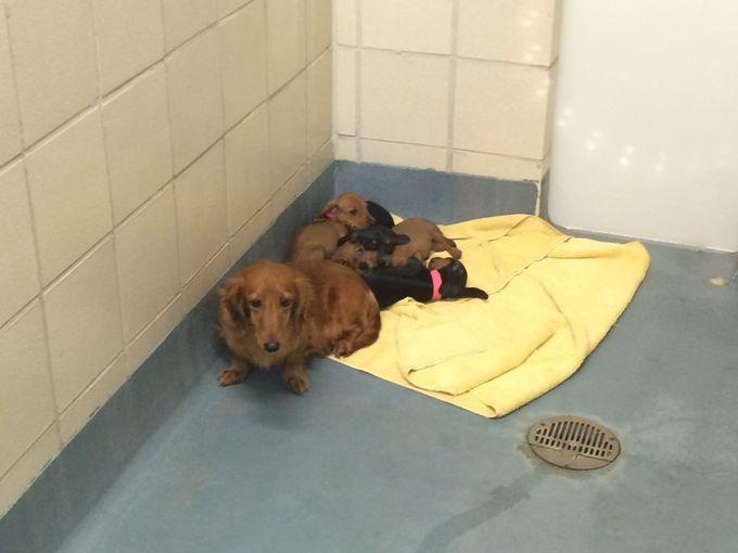 Pin By Jephi Jenn Clark On Doxie Love Dogs Animal Shelter