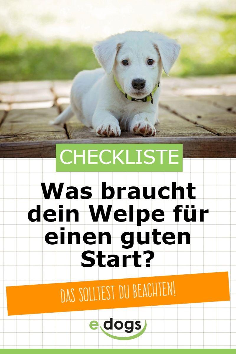 Checkliste Erstausstattung Welpen Hunde Hundewelpen