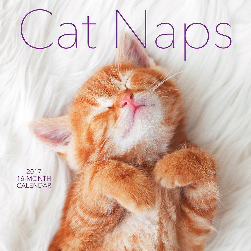 Cat Kitten Naps 2017 Calendar Sleeping Kitten Kitten Care Kitten Food Brands