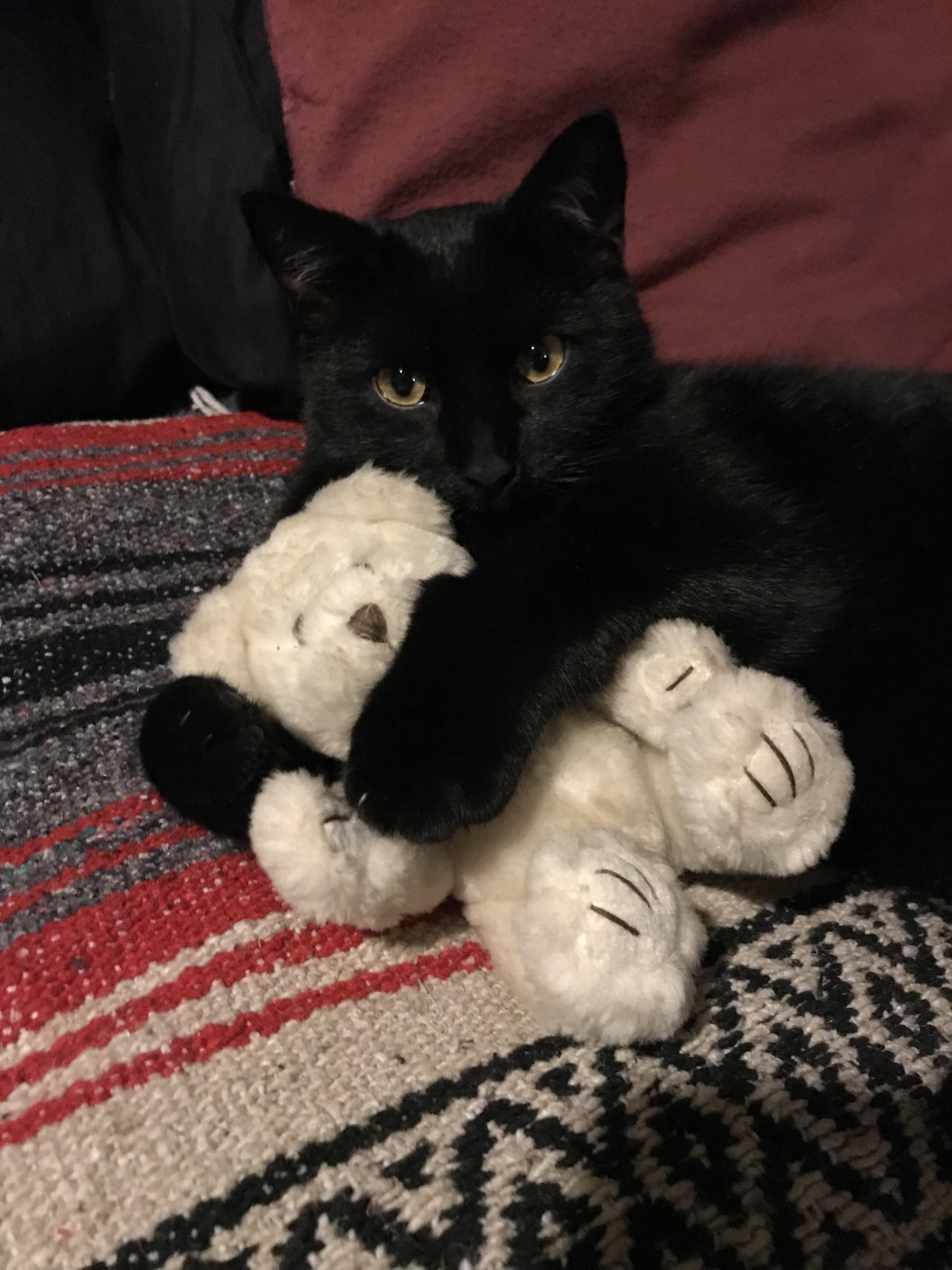 Zero Cuddling A Teddy Bear Http Ift Tt 2kazxbo Teddy Bear Dog Cat Day Cat Lovers