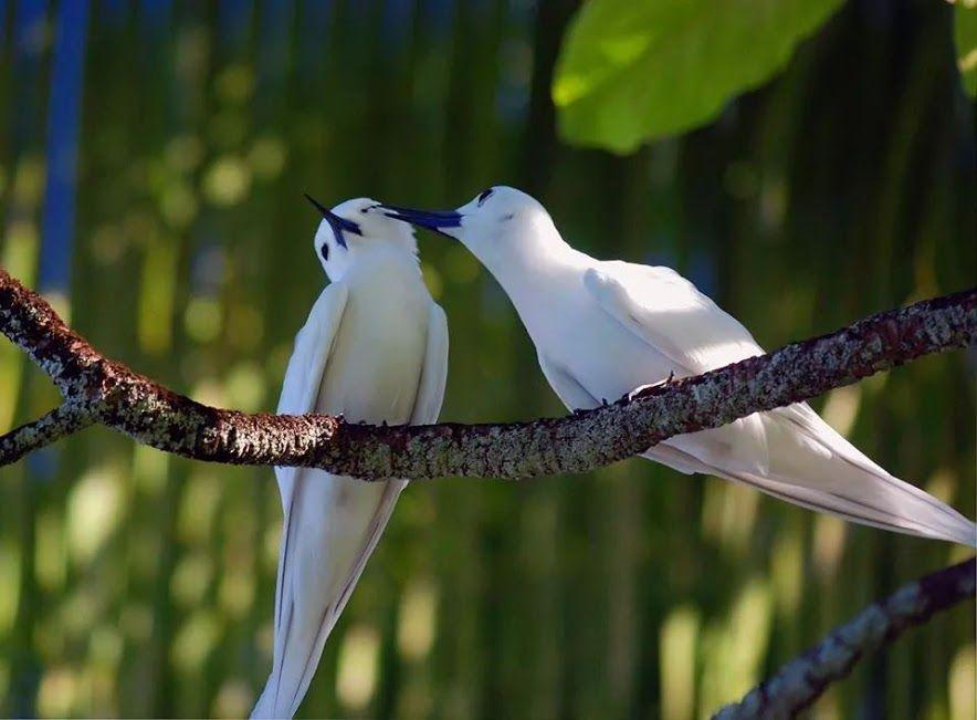 7ba57db1551a Kittike oldala - G-Portál | Adorable Animals