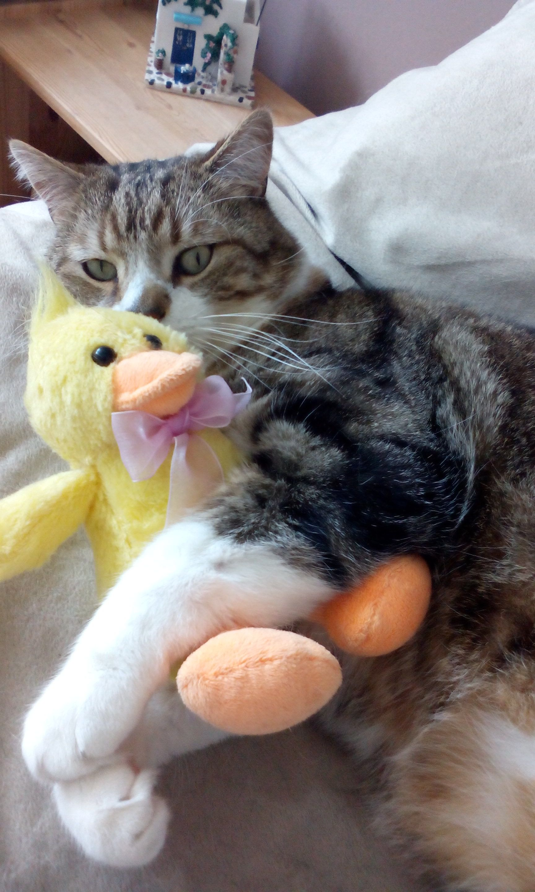 Ducky you're the one (With images) Kitten meowing, Cats