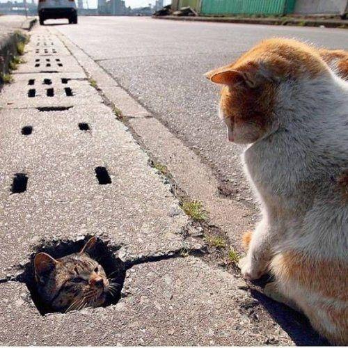 Resultado de imagem para cat