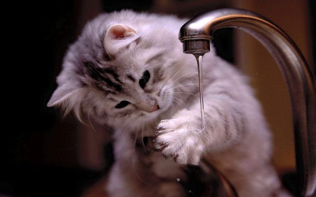 25 Funny Cats And Kittens Pictures Funny Cat Dompict Com Kitten Pictures Crazy Cats Kittens Cutest