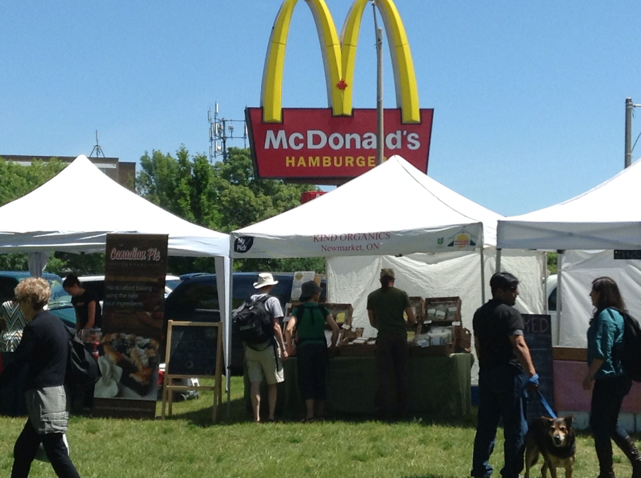 Interesting juxtaposition   the humble organic farmer feeling the Golden Arches looming overhead!  www.livingintdot.com