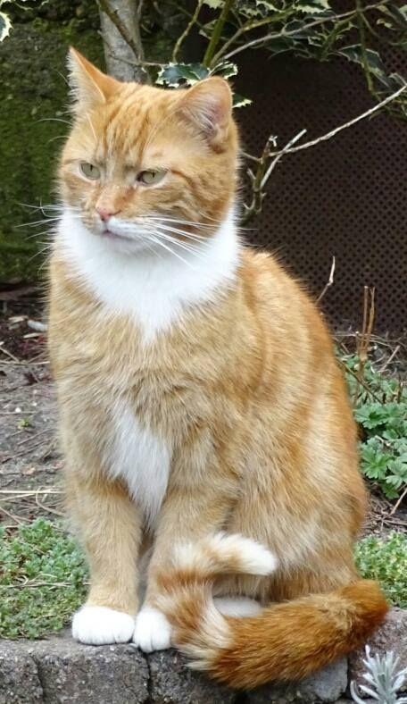 Pin by Melissa Gartner on Cute Cats Beautiful cats