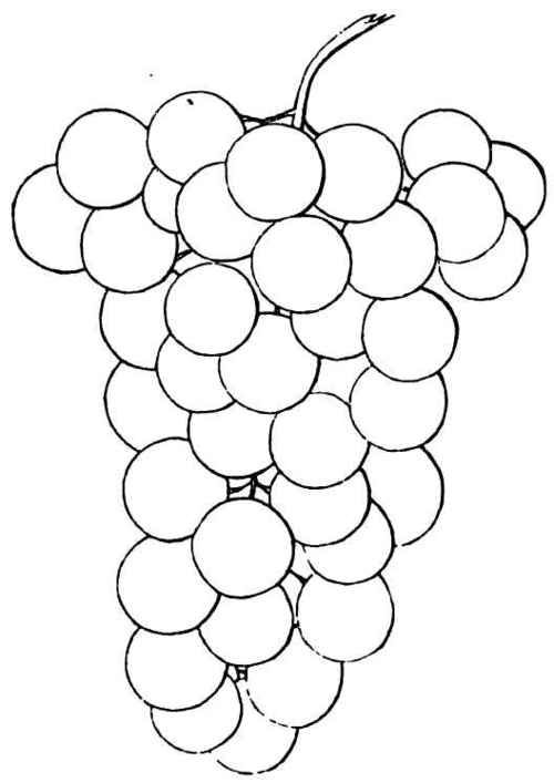 coloring pages grapes drawings