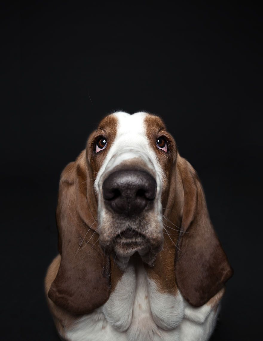 We Proved That Every Dog Has Its Own Human Like Personality