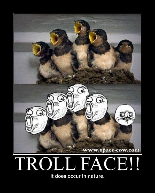 Troll Face Motive by earthquakes123.deviantart.com on @deviantART