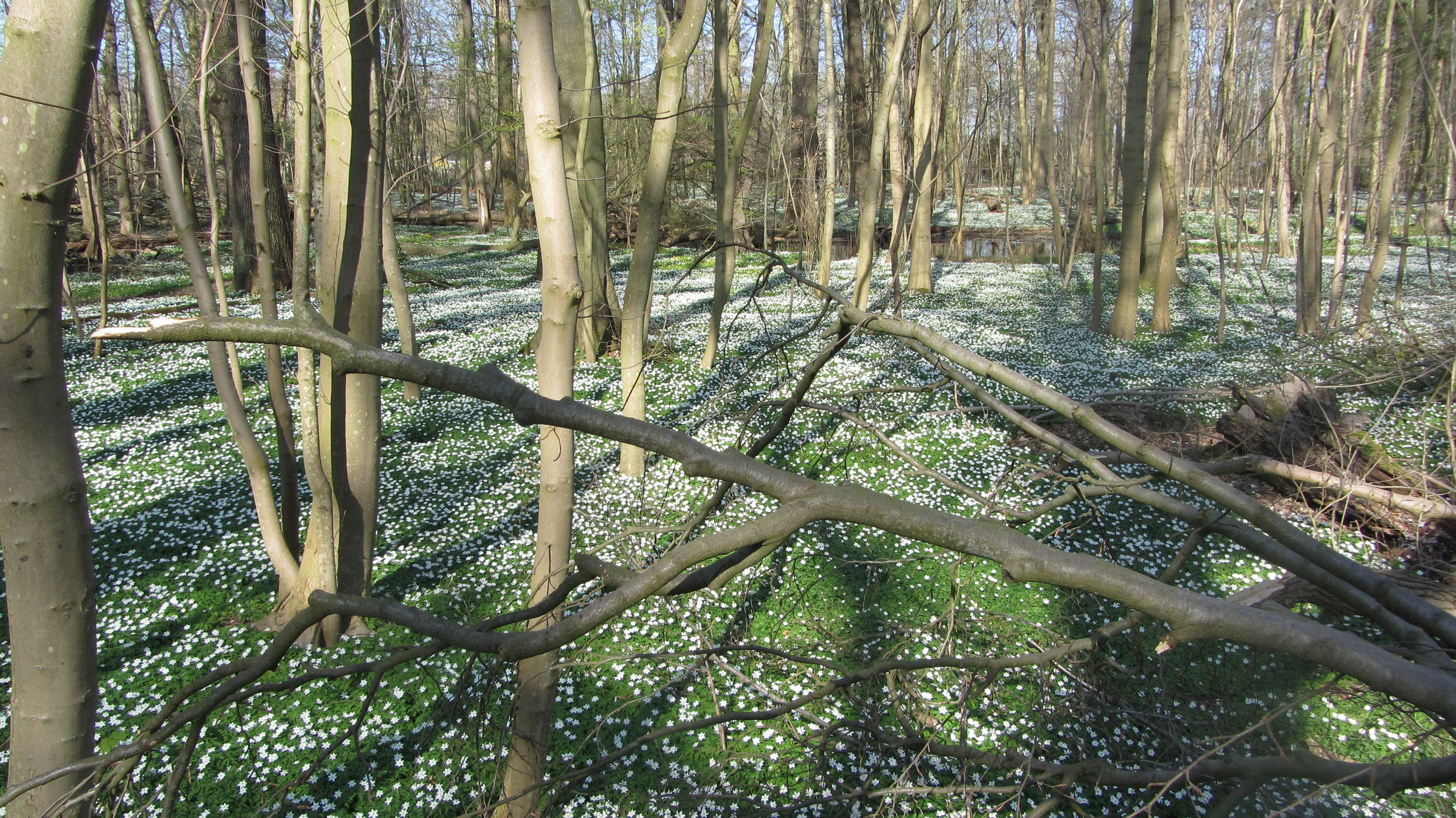 Beautiful Naturschutzgebiet Eldena Elisenhain in Greifswald Mecklenburg Vorpommern