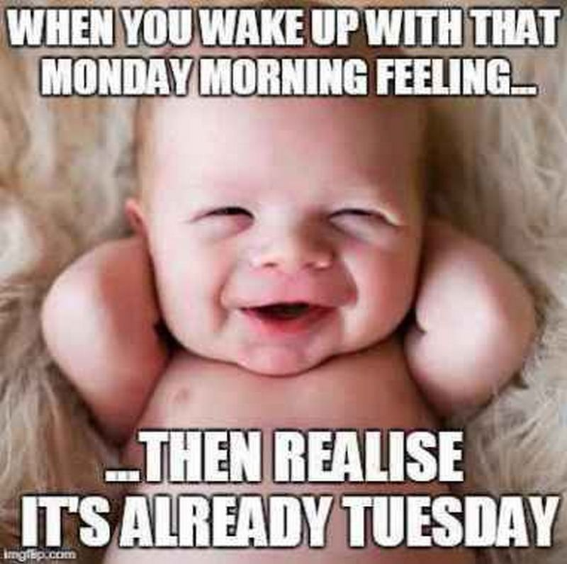 101 Funny Tuesday Memes When You Re Happy You Survived A Workday Morning Quotes Funny Tuesday Humor Happy Tuesday Quotes