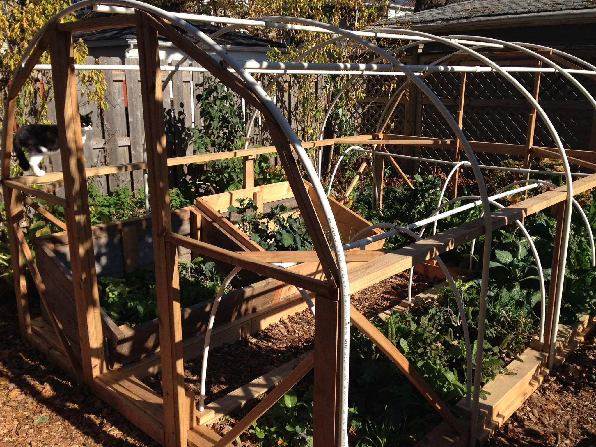 Hoop house with cold frames and raised beds Cold frame