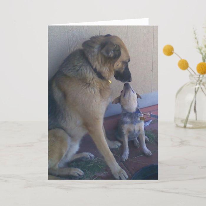 Vet Graduate Congratulations Graduation Dogs Pets Card Zazzle