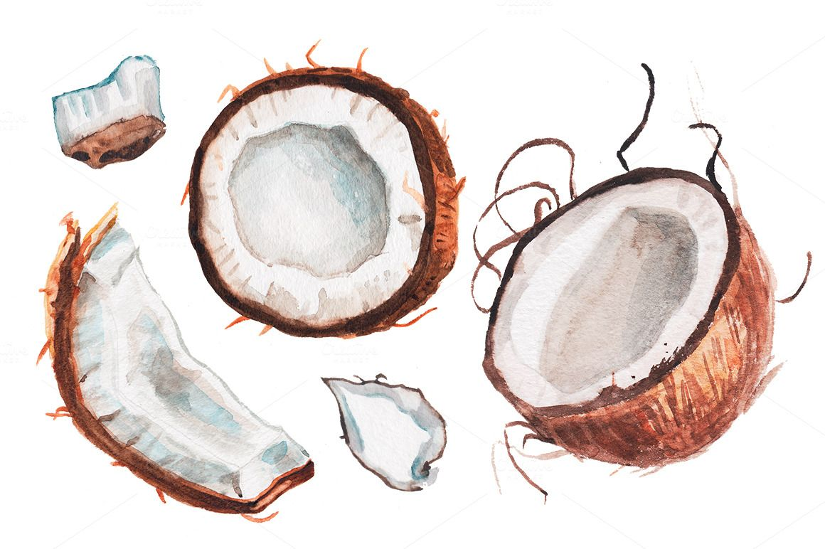 Watercolor Coconut Illustration ภาพวาด สต กเกอร โปสเตอร