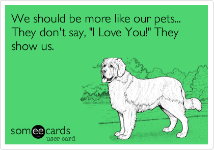 We Should Be More Like Our Pets They Dont Say I Love You They Show Us
