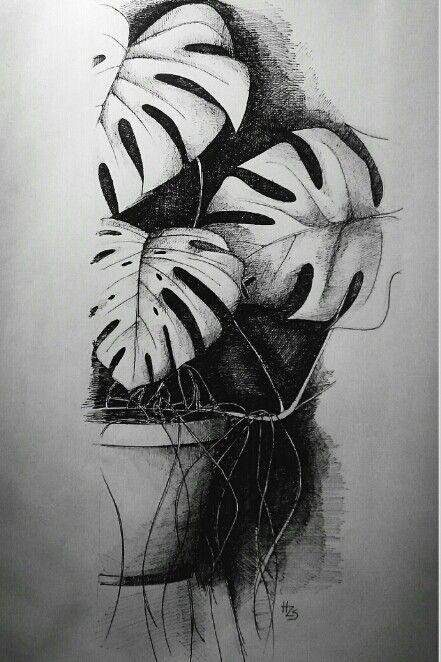Monstera leaf | Art & Color | Pencil drawings, Drawings, Art