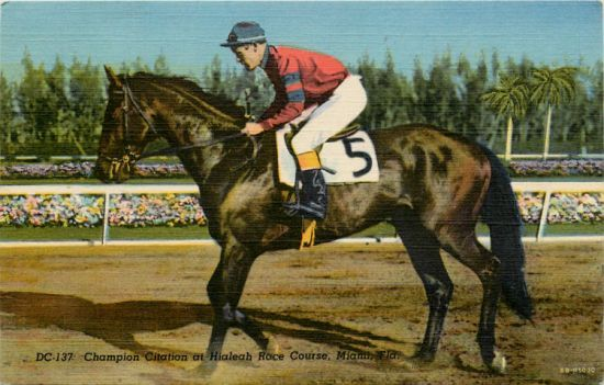 Citation 1948 Triple Crown Postcard Thoroughbred Horse Racing Horses Horse Racing