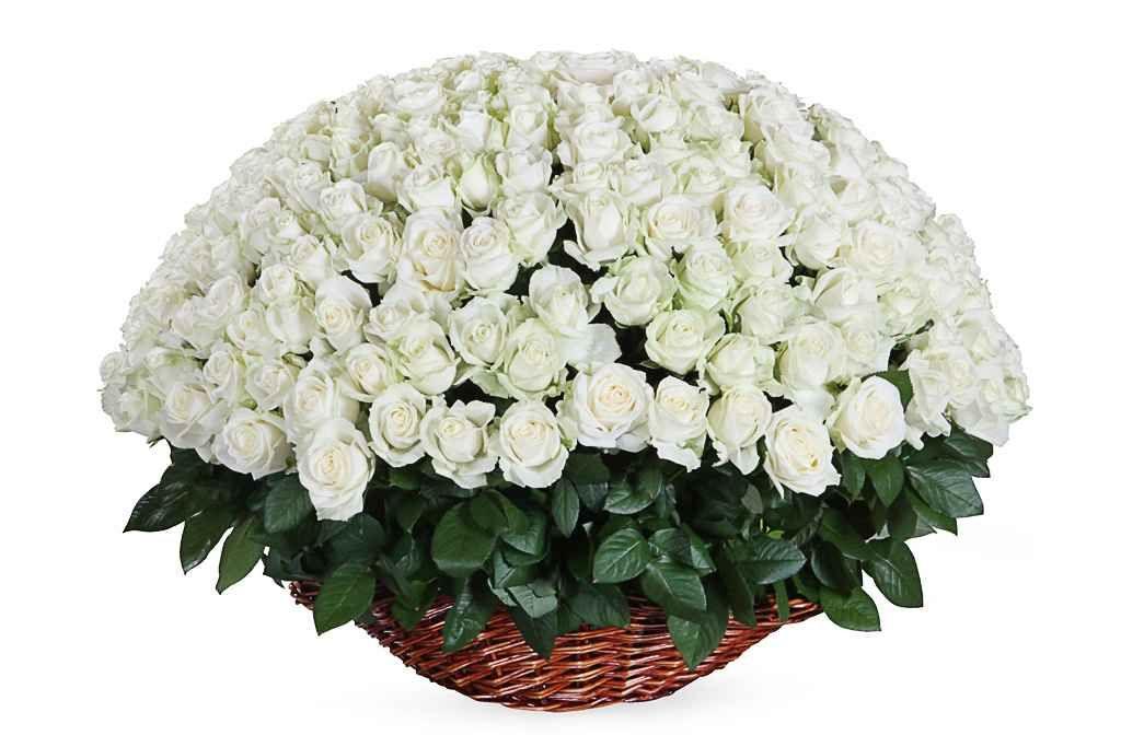 Кумушке открытка, красивые букеты из белых роз открытки