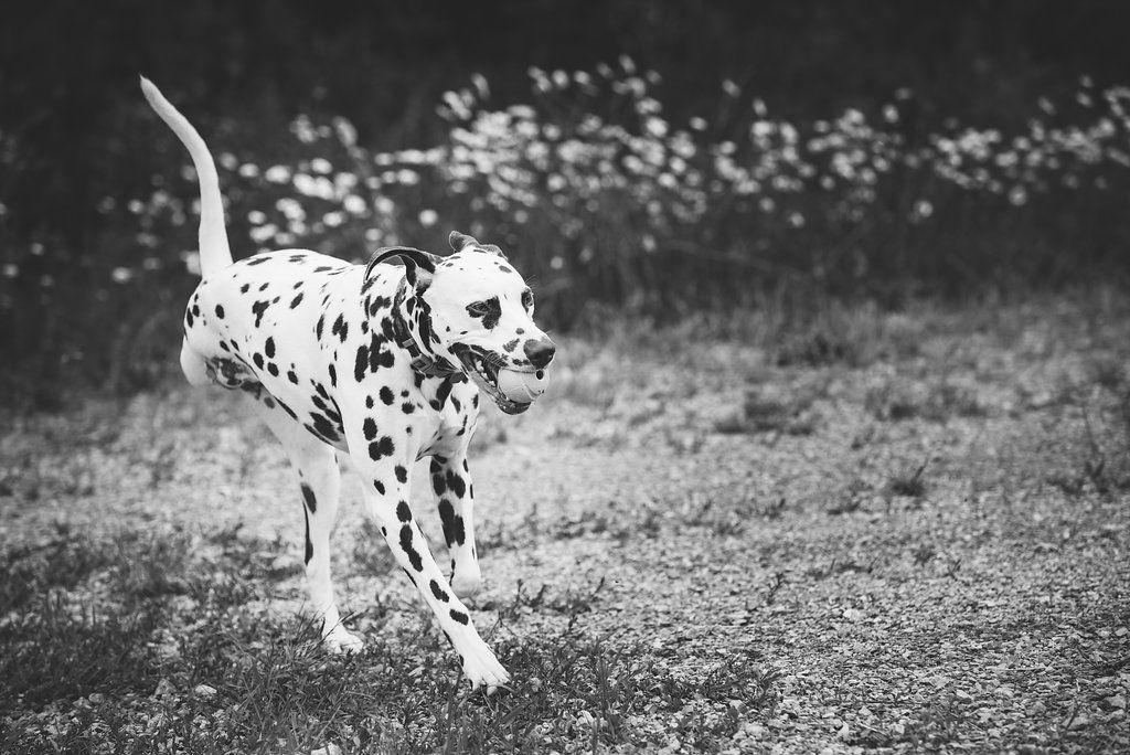 June & Paizley. Toledo Area Pet Photography. Whiteford