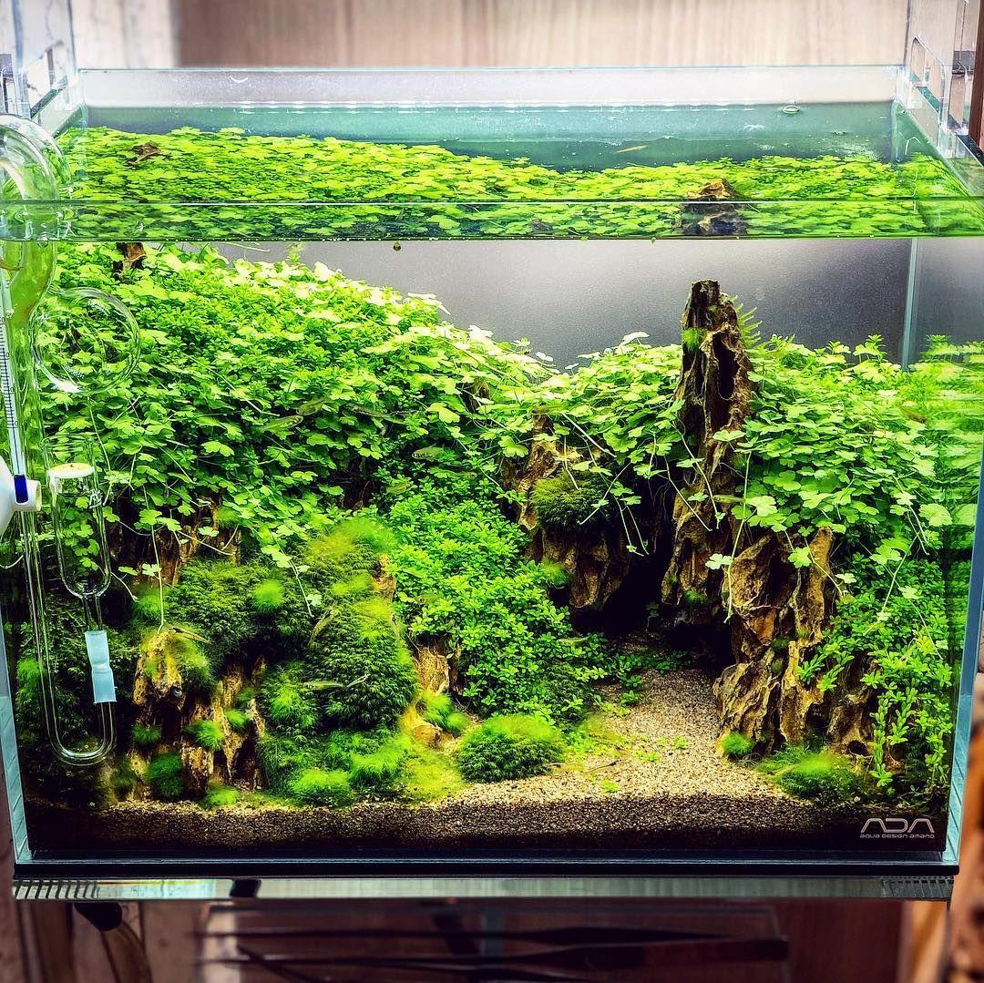 Credit To @kouji7655i On Instagram. #aquascape #aquarium