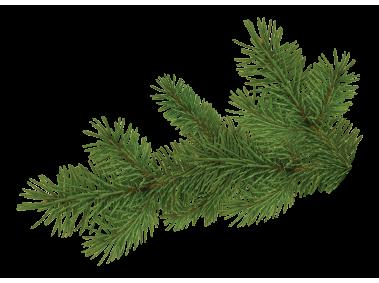 Pine Tree Branch Pine Tree Silhouette Tree Of Life Artwork Palm Trees Wallpaper