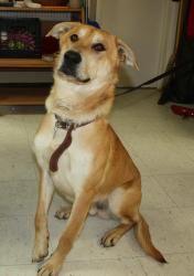 Adopt Flynn On Petfinder Pretty Brown Eyes Labrador Retriever Dog Short Hair Styles