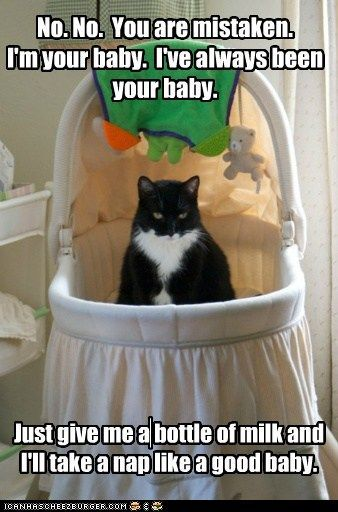 images about It     s the Cats      World  We Just Live In It on Pinterest   Remember this