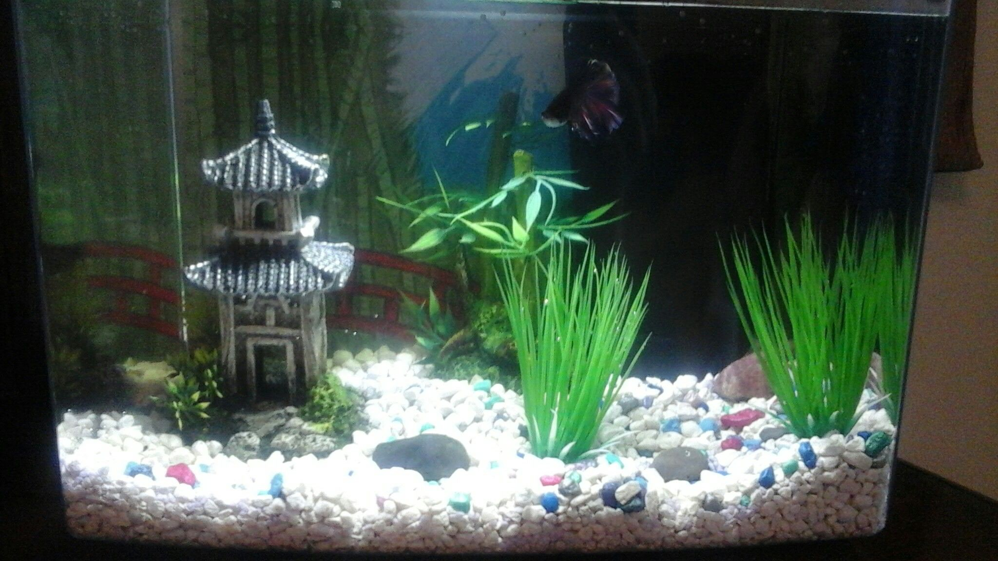 This is my Olivia Woodland s old fish tank It s 3 gallons My