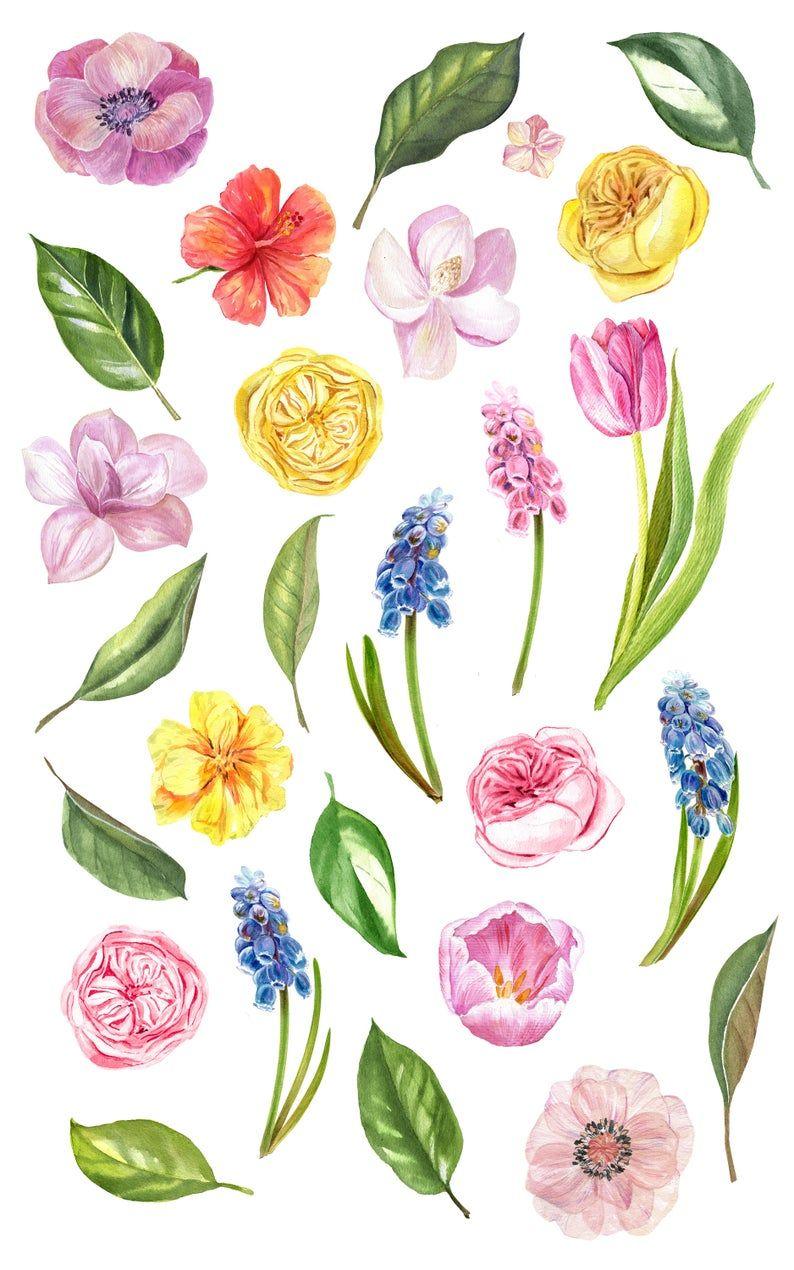 12+ Spring flower clipart wallpaper info
