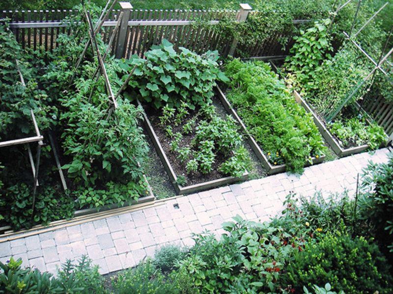 backyard garden plannin small vegetable garden design garden garden ideas - Backyard Garden Ideas Vegetables