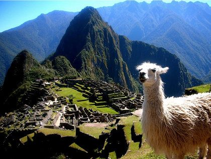 Can't help but smile when seeing this photo! A llama poses in front of Machu Picchu, Peru. (Photo by brendan ó/Flickr)