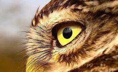 """Vögel sind gern gesehene Gäste in unseren Gärten. Hier finden Sie die besten Tipps, wie Sie Ihren Garten in ein Vogelparadies verwandeln können. - Ein Bild aus unserer Fotocommunity. Danke """"winni""""!"""