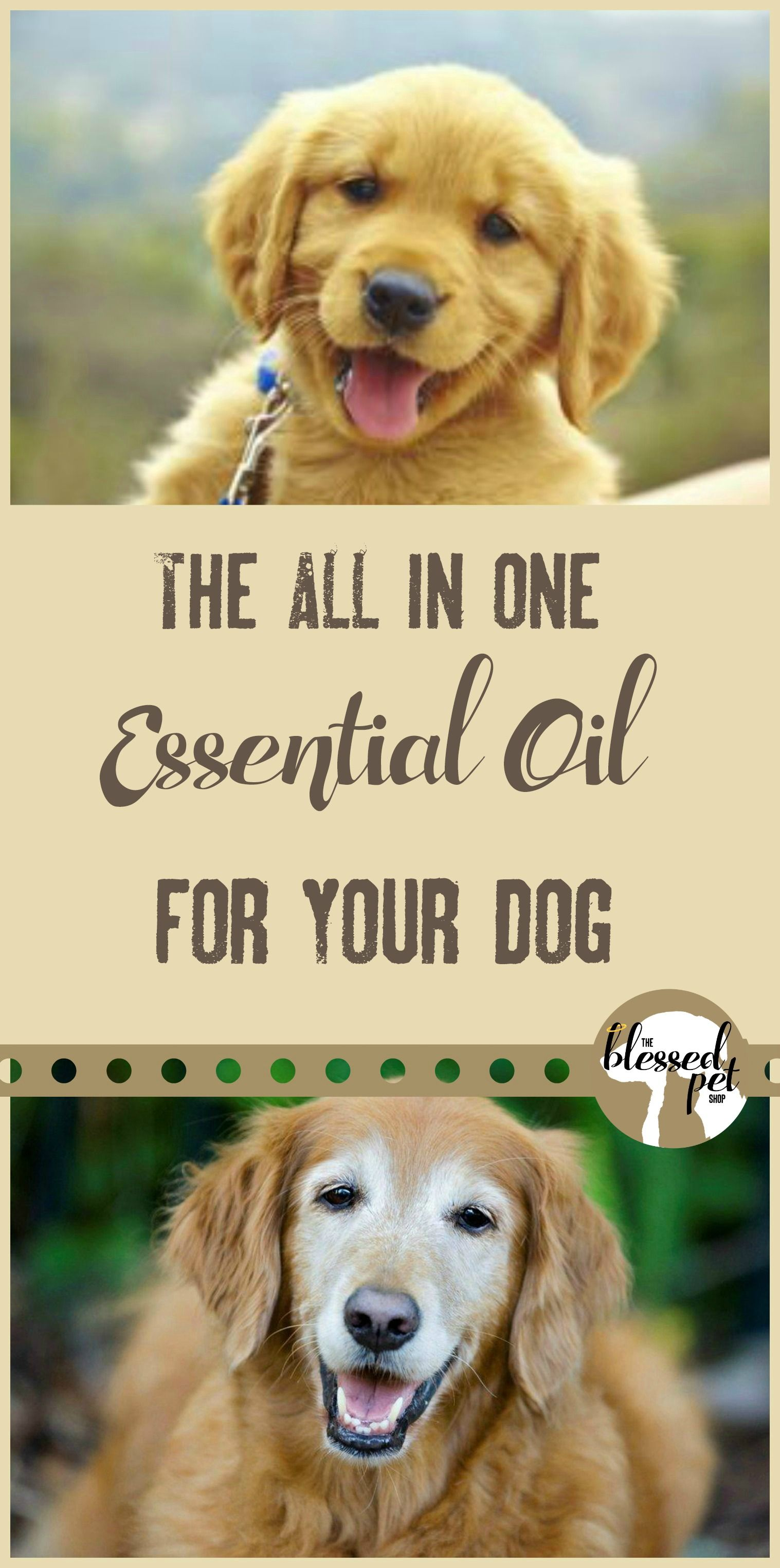 The One Essential Oil That Does It All Essential Oils Dogs