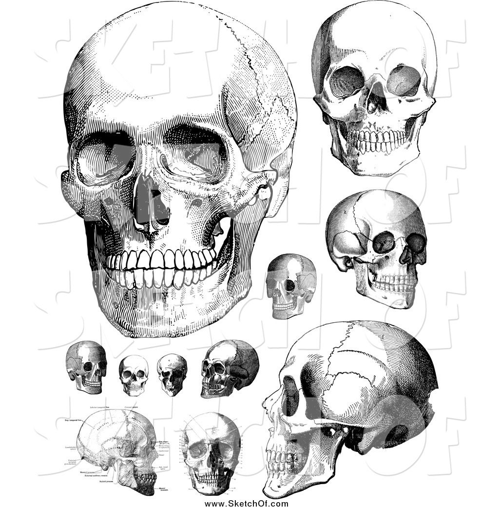 human skull anatomy drawing - Google Search | Anatomy | Pinterest ...