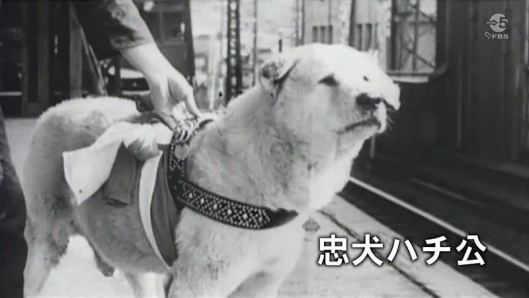 Hachiko - I really like the style of his harness. | K9 | Dogs, Loyal
