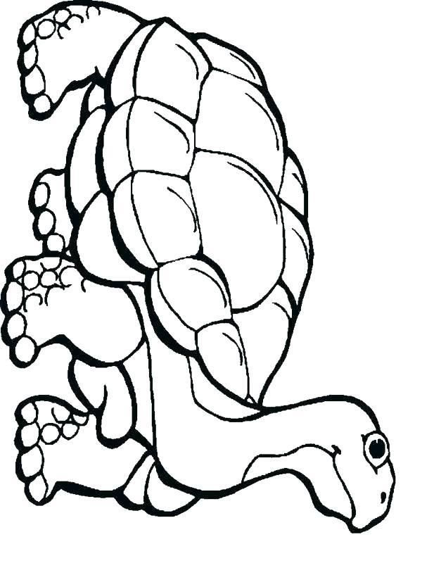 Ball Python Coloring Pages Reptiles Coloring Pages Animals