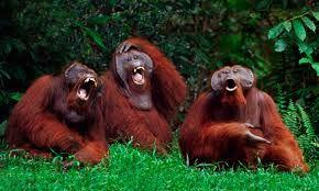 Resultado de imagen para animals laughter