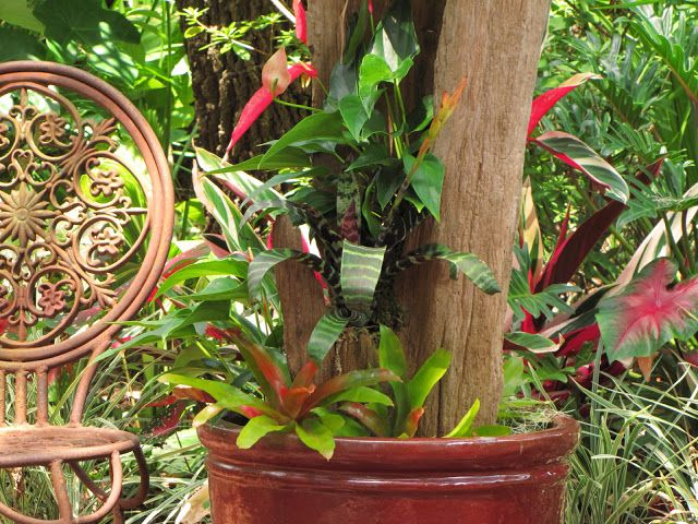 "Hoe and Shovel: Step by Step Guide to make this beautiful container garden. ""Bromeliads provide uniquely colorful, tropical texture to any Florida garden. Terrestrial bromeliads are an excellent ground cover. They multiply rapidly in the bright, filtered sunlight under my mature oak trees."""